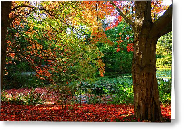 Where Autumn Lingers  Greeting Card by Connie Handscomb