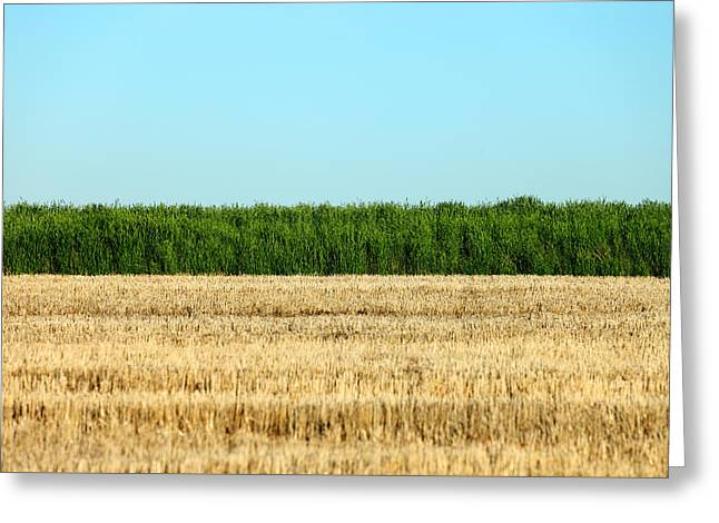 Where Land And Sky Meet Greeting Card by Todd Klassy