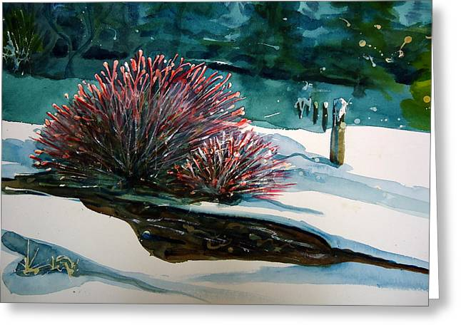 Where Streams Begin Greeting Card by Steven Holder