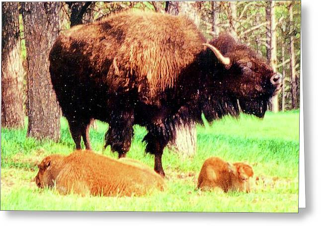 Where The Buffalo Roam Greeting Card by Desiree Paquette