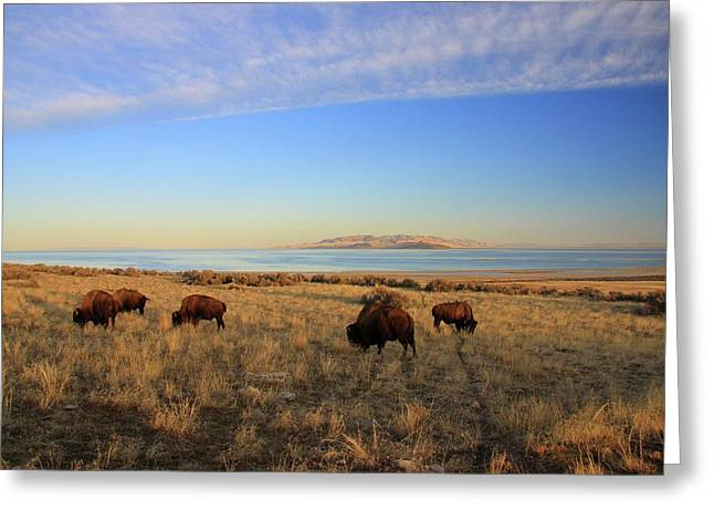 Where The Buffalo Roam Greeting Card by Gene Praag