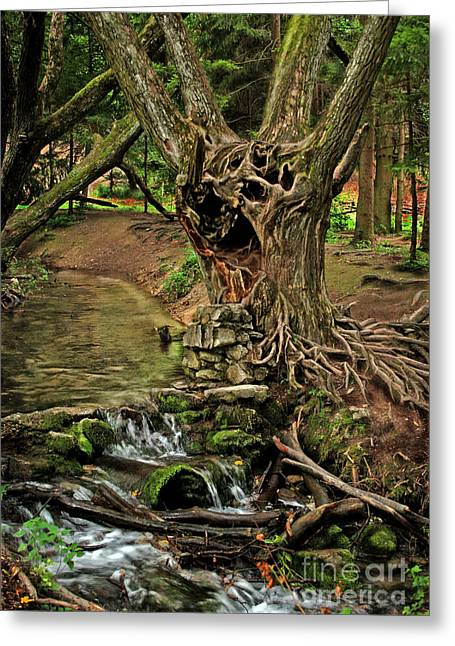 Where The Ents Are Greeting Card by Angel  Tarantella