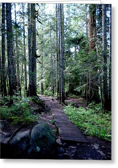 Where The Path Might Take You Greeting Card by Jeff Swan