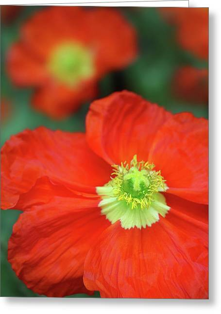 Where The Poppies Bloom Greeting Card by Iryna Goodall