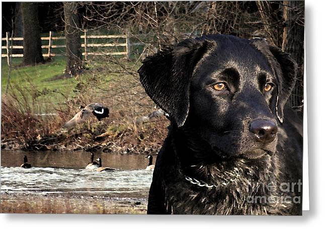 Where's The Geese Labrador 4 Greeting Card by Cathy  Beharriell