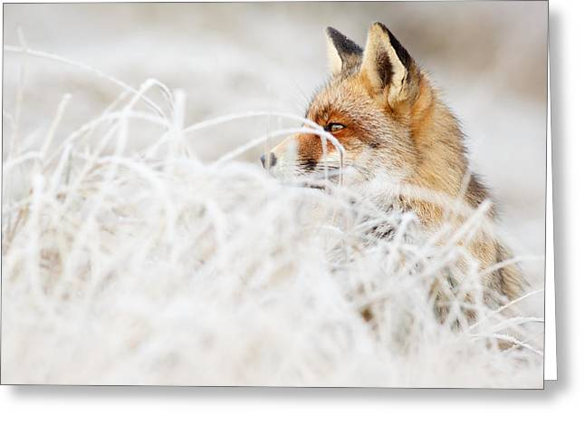 Which Fox....where? Greeting Card by Roeselien Raimond