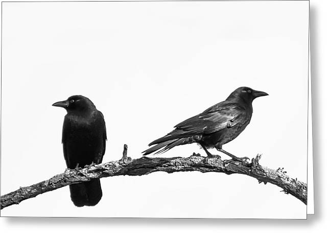 Which Way Two Black Crows On White Square Greeting Card
