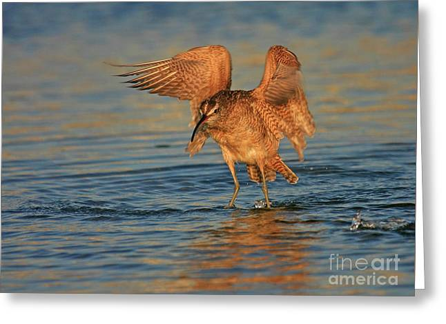 Whimbrel Colors Greeting Card