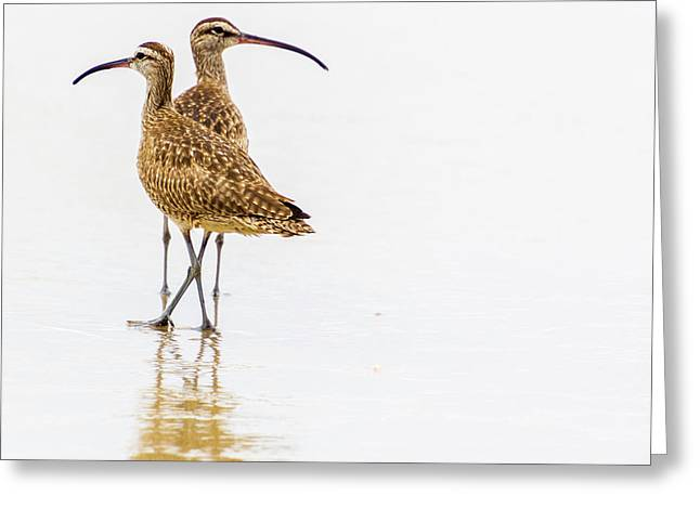 Greeting Card featuring the photograph Whimbrel Sandpiper On The Beach by Randy Bayne