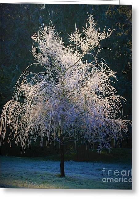 Whimsical Winter Willow Greeting Card