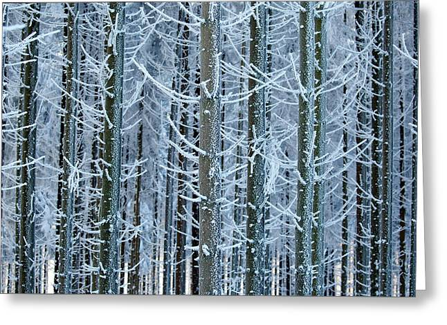 Whimsical Winters Greeting Card