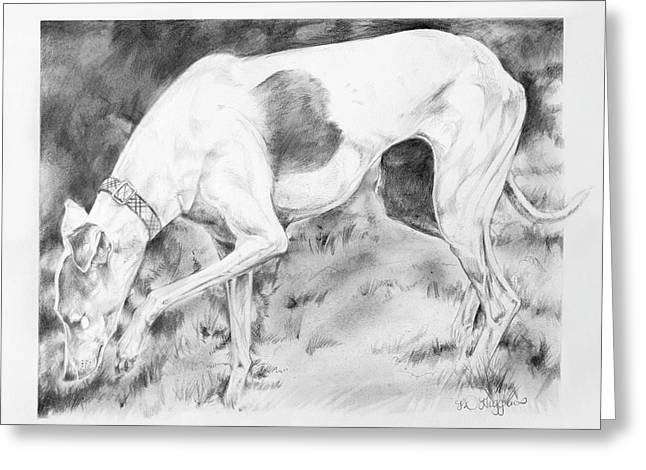 Whippet Searching Greeting Card