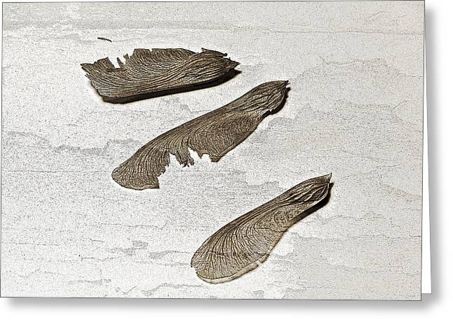 Whirlybirds  Greeting Card