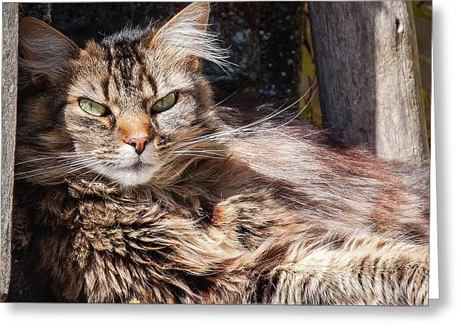 Greeting Card featuring the photograph Whiskers by Geoff Smith