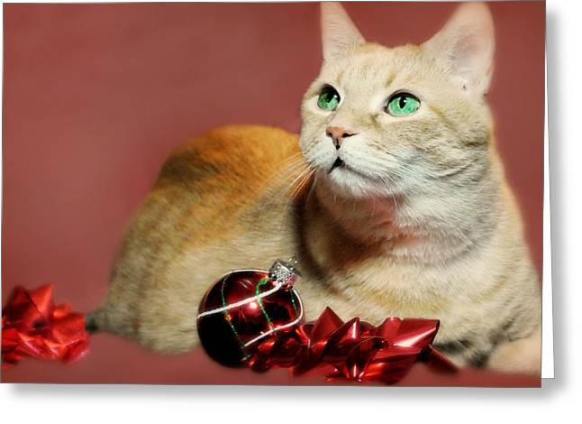 The Christmas Cat Greeting Card