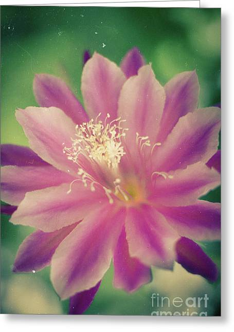 Greeting Card featuring the photograph Whisper Of Color by Ana V Ramirez