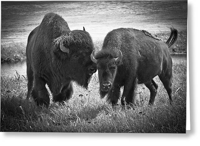 Whispering Bison Greeting Card