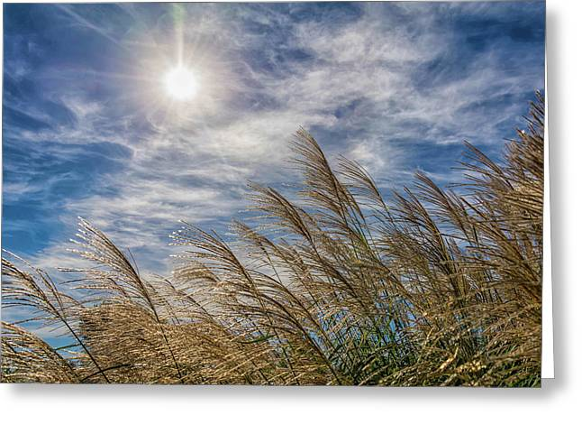 Whispering Grasses Greeting Card