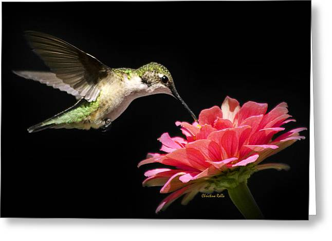 Whispering Hummingbird Square Greeting Card by Christina Rollo