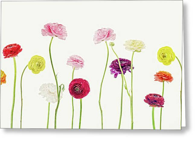 Whispering Spring Greeting Card