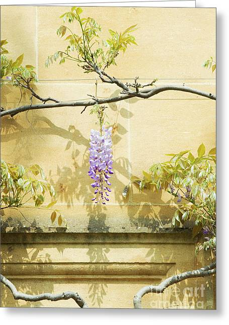 Whispering Wisteria Greeting Card by Tim Gainey