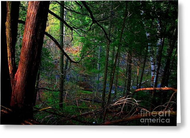 Greeting Card featuring the photograph Whisperings by Elfriede Fulda
