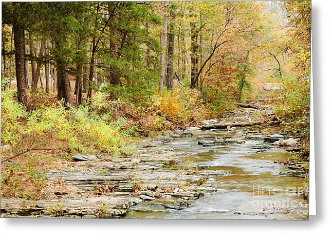 Whispers In The Creek Greeting Card by Iris Greenwell