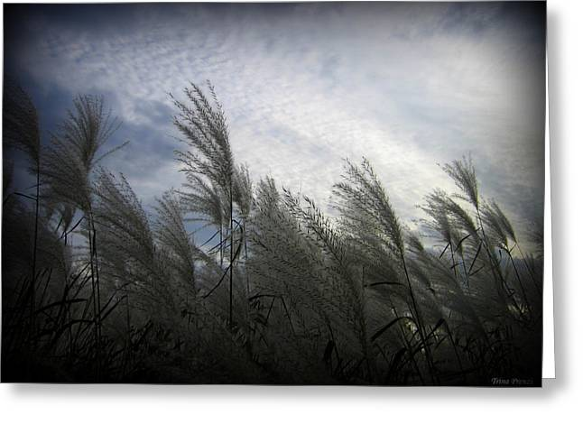 Whispers In The Wind Greeting Card by Trina Prenzi