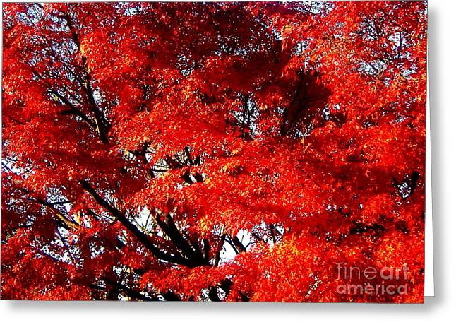Whispers Of A Japanese Maple Greeting Card by Juliette Carter-MarShall