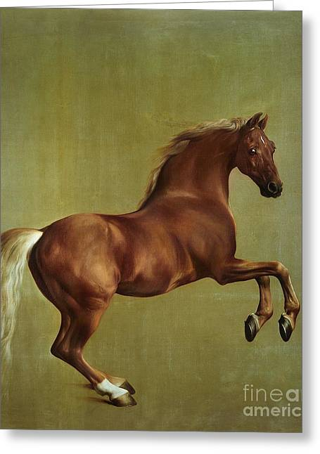Whistlejacket Greeting Card