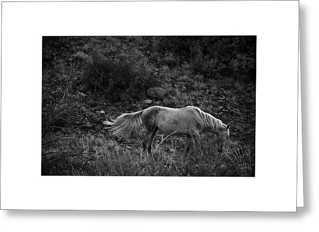 Greeting Card featuring the photograph White 47 by Catherine Sobredo