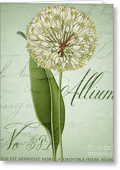 White Allium I Greeting Card by Mindy Sommers