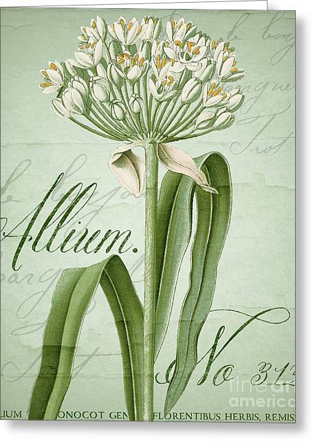 White Allium II Greeting Card by Mindy Sommers