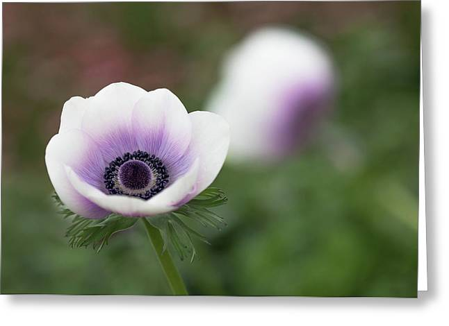 Greeting Card featuring the photograph White And Purple by Rebecca Cozart