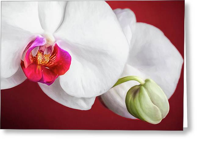 White And Red Orchids Greeting Card
