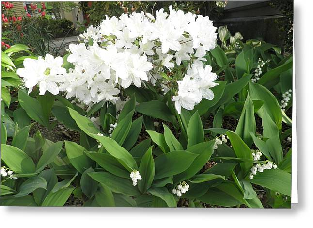 White Azaleas And Lily Of The Valley Greeting Card