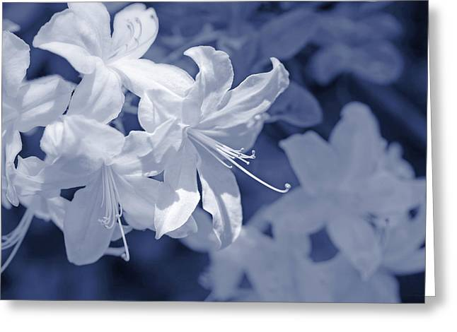 Greeting Card featuring the photograph White Azalea Flowers Blues by Jennie Marie Schell
