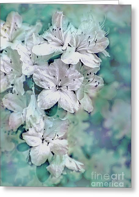 White Azaleas Greeting Card by Sandy Moulder