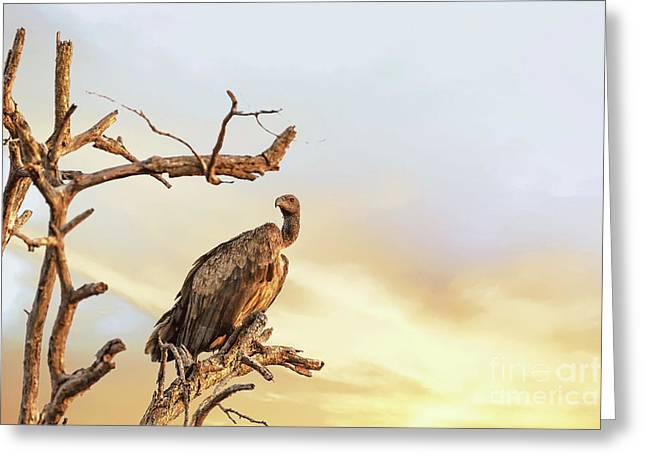 White-backed Vulture Greeting Card by Jane Rix