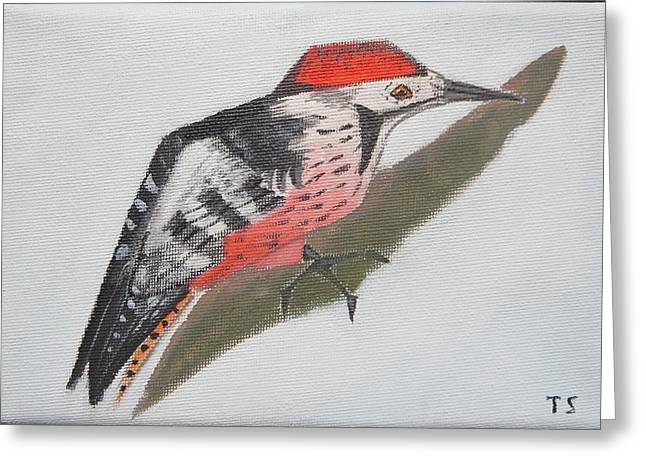 White-backed Woodpecker Greeting Card