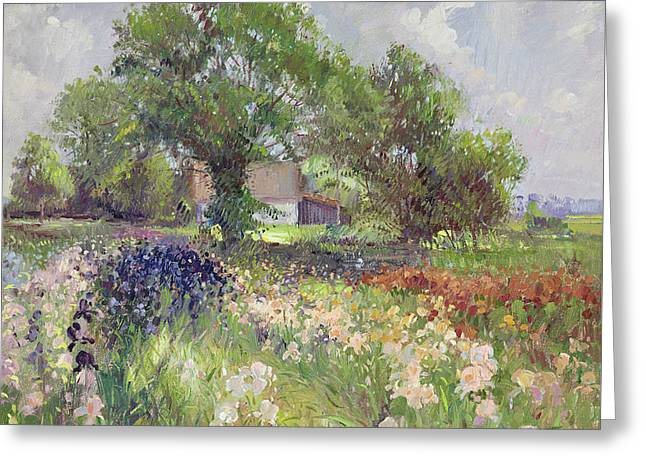 White Barn And Iris Field Greeting Card