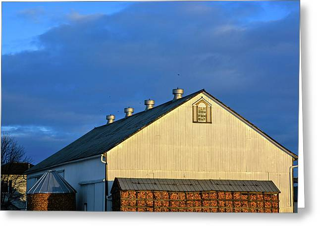 White Barn At Golden Hour Greeting Card