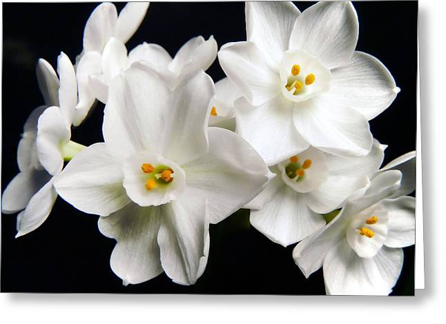 White Beauty Greeting Card by Mary Lane