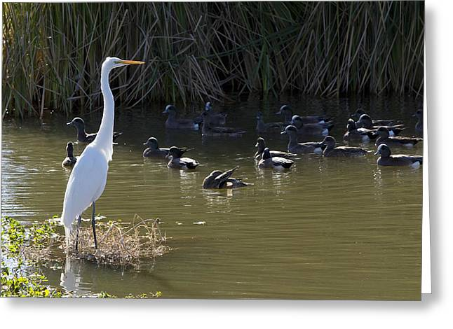 Greeting Card featuring the photograph White Beauty by Phyllis Denton