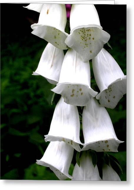 White Bells Greeting Card by Jeanette Oberholtzer