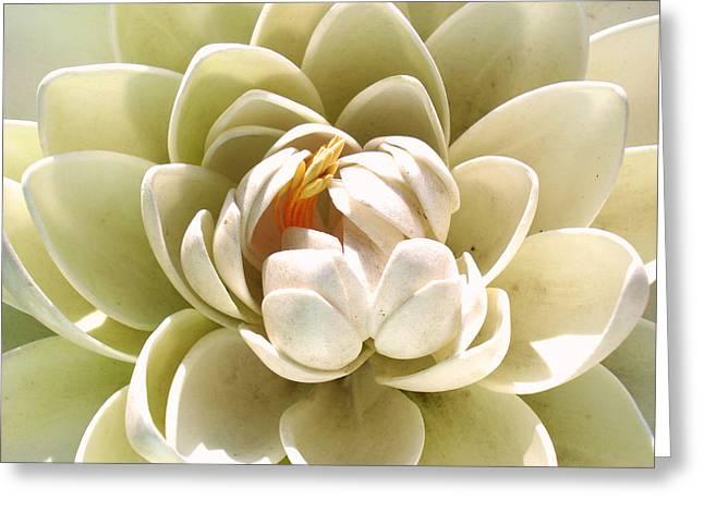 White Blooming Lotus Greeting Card