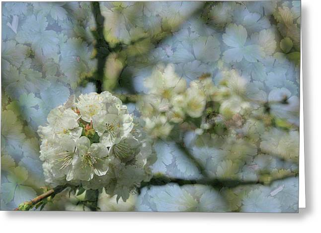 White Blossom Flowers With Leaves Texture Background Greeting Card