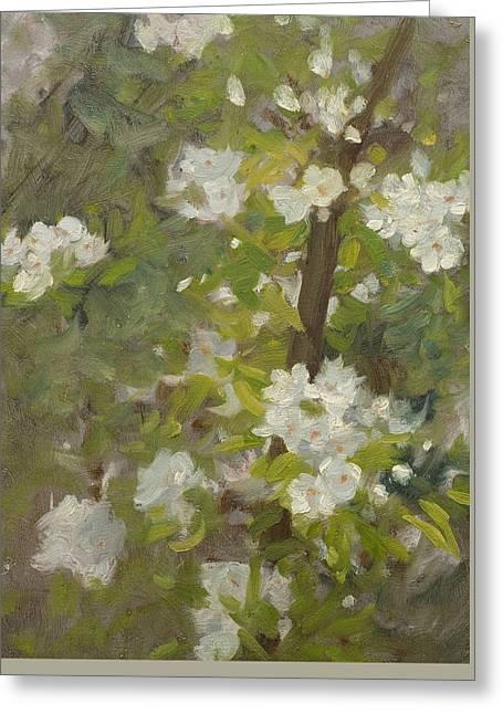 White Blossom Greeting Card by Henry Scott Tuke