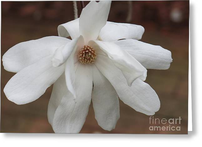 Greeting Card featuring the photograph White Blossom by Rod Ismay