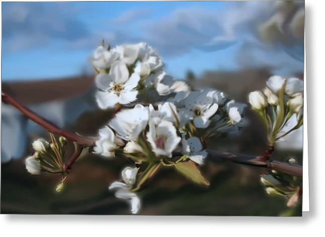 White Blossoms Greeting Card by Robert Bewick